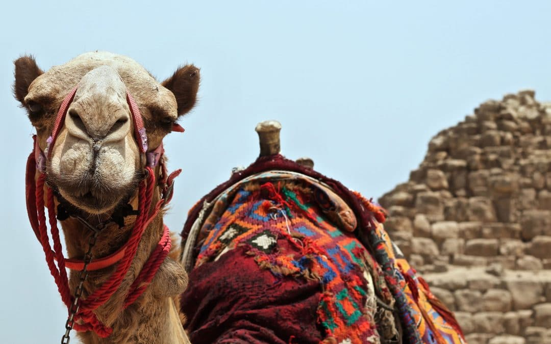 Trust G-d But Tie Your Camel - 30 Tales from Muslim Sources | Folk Tales | Traditional Tales | Storyteller | Ziyadliwa